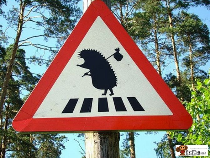 картинки дорожные знаки прикольные